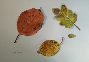 осенние листья акварель
